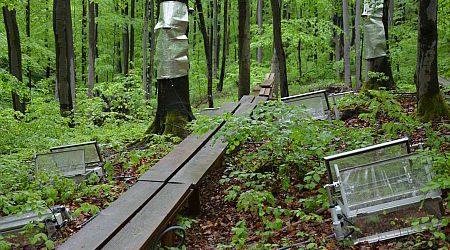 Freiluft-Labor im Wienerwald für Langzeit-Forschung