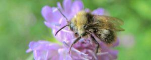 """""""Rettet die Bienen!"""" als Bürgerinitiative anerkannt"""