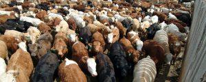 Skepsis und vorsichtige Zustimmung zu Mercosur