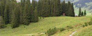 Ein Euro im Schutzwald spart 100 Euro für Verbauungen