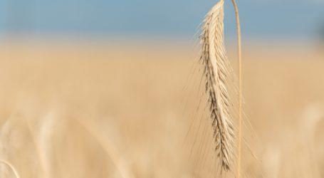 Börse für landwirtschaftliche Produkte wurde 150