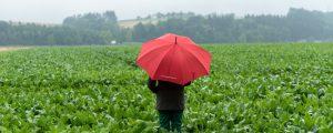 Mercosur: Weitere Zugeständnisse bei Zucker möglich