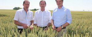 Neuer Anlauf für AMA-Gütesiegel bei Getreide