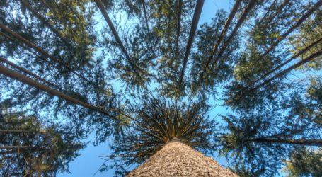 Schmiedtbauer will Solidaritätsfonds für Klimaschäden im Forst