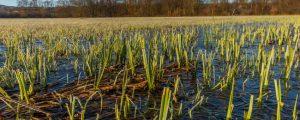 Natura 2000-Vertragsverletzungsverfahren eingestellt