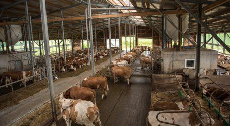 Berglandmilch startet Auszahlung von Tierwohlbonus