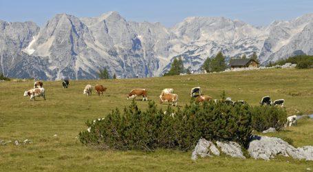 Herdenschutz wird auf vier Tiroler Almen untersucht