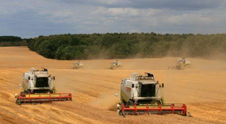 Deutsche Getreideernteprognosen nach unten korrigiert