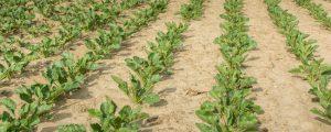 Schwacher Zuckerpreis drückt Agrana-Konzerngewinn