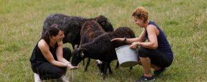 Maschinenring bringt Freiwillige auf steirische Bauernhöfe