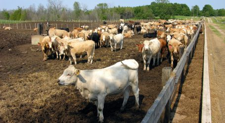 US-Farmer sollen mehr Beef nach Europa liefern
