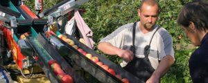 Europäische Apfelernte wird heuer geringer ausfallen