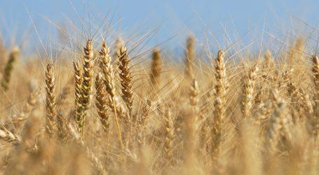 EU-Erntemenge besser, weltweit aber Stagnation