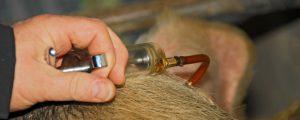 Bayer gibt Tiergesundheits-Sparte ab