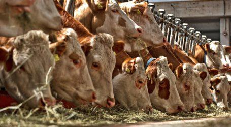 Milchwirtschaftliche Tagung heuer in Gmunden