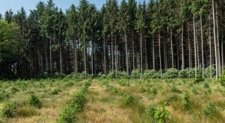 Klöckner mit 4-Punkte-Maßnahmenplan für deutsche Wälder