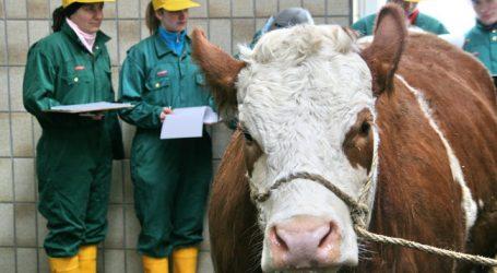 AMA änderte Schlachtgewicht für Gütesiegel-Ochsen