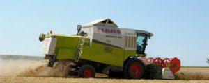 Deutsche Getreideernte unter mehrjährigem Durchschnitt