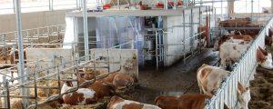 Entlastung am Milchmarkt
