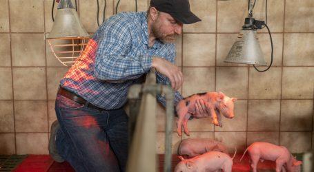 Fusion in Schweinezuchtbranche