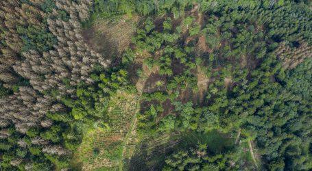 Wälder bekommen Klimawandel heftig zu spüren