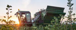 180 ha Ginkgostrauch im Waldviertel abgeerntet