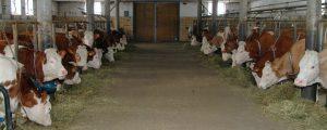 Tagung zum Tierwohl für Tiroler Milchbauern