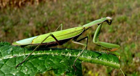 Studie bekräftigt Rückgang der Insekten