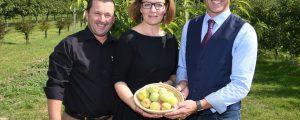 Suche nach Pfirsichsorten im Weingarten