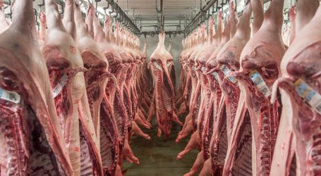 Chinesischer Sog nach EU-Schweinefleisch