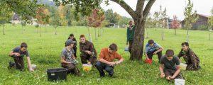 Norbertinum feiert den Obstbaum