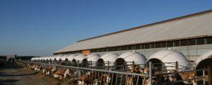 Ukraine stockte Geflügelbestand auf