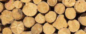 Wald liefert Grundstoff für Futtermittelzusätze