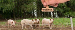 Mehr Bio könnte in England negativ für Klima sein