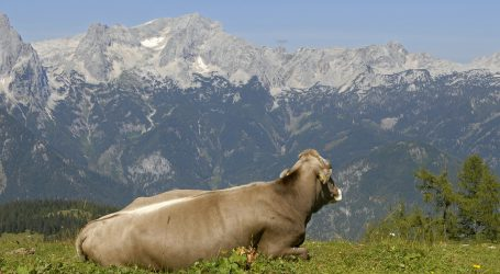 Erfreuliche Ergebnisse bei TBC in Vorarlberg