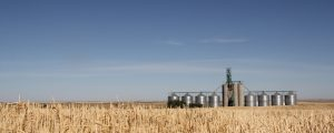 EU genehmigt Verarbeitung von acht GVO-Sorten
