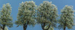 Neun EU-Staaten belohnen Agroforstflächen