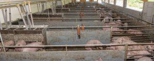 LK-Tirol verleiht erstmalig Tierwohlpreis