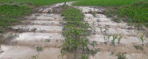 Klima: Auswirkungen auf den Boden und die Pflanzen