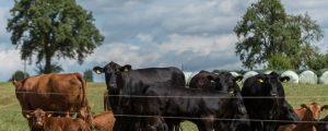 Fleischerzeuger demonstrieren vor EU- Kommission
