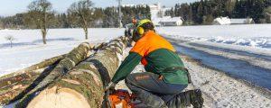 Lehrvideos für Kleinwaldbesitzer