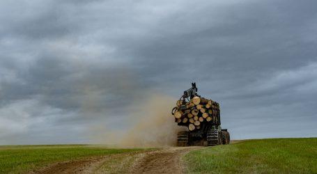 Parkettfirmen des illegalen Holzhandels bezichtigt