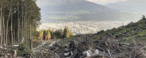 Schutzwaldpflege ist defizitär