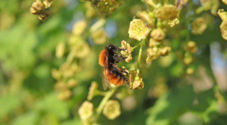 Bauern beteiligen sich am Bienenschutz
