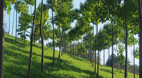 Für Paulownia-Holz mit Vifzack 2020 prämiert