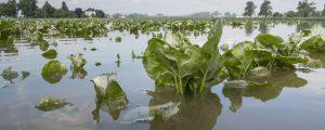Madrider Konferenz bedroht Agrarwirtschaft