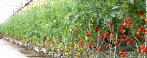 Zehn Fakten zur Welternährung