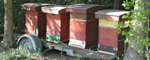 Um 16% mehr Honig in EU erzeugt