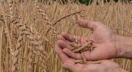 Saatguttagung über Vorteile der Landsorten