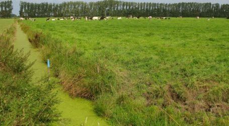 Holländische Bauern zieht es in die Fremde